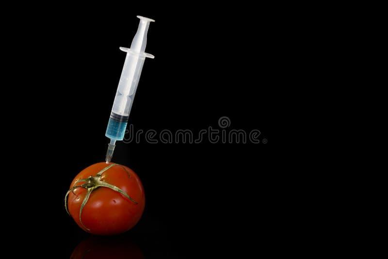 Vacina Genetically alterada do tomate dos vegetais imagens de stock royalty free