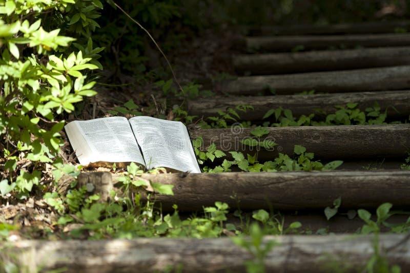Vackert landskap med solljus pÃ¥ öppna Bibeln i Isaiah kapitel 40 utomhus. Bibel pÃ¥ trästÃ¥ngssteg. kopiera avst?nd fotografering för bildbyråer