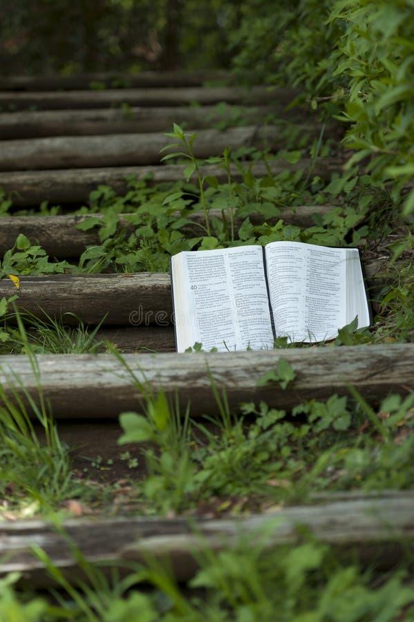 Vackra öppna Bibellandskapet i Isaiah-kapitel 40 utomhus på ett trätrappsteg. kopiera avst?nd arkivbild