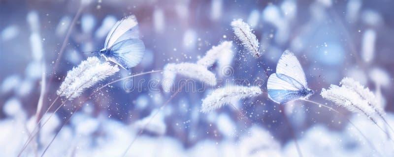 Vackra blå fjärilar i snön på det vilda gräset Naturlig bild av Snowfall Konstantliga vinterjulklampar Vinter och fjäder bakåt arkivbilder