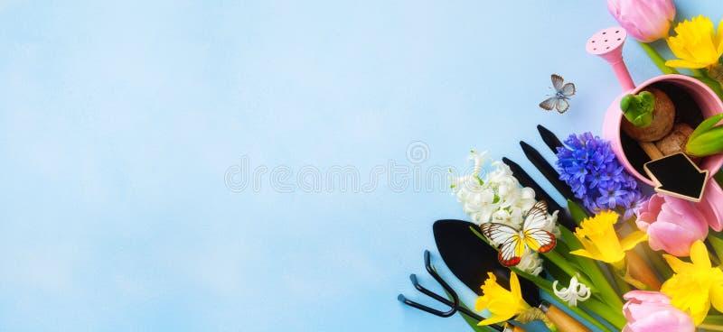 Vackra källare med trädgårdsverktyg, färgstarka vårblommor och fjärilar Överkant Banderollformat royaltyfri bild