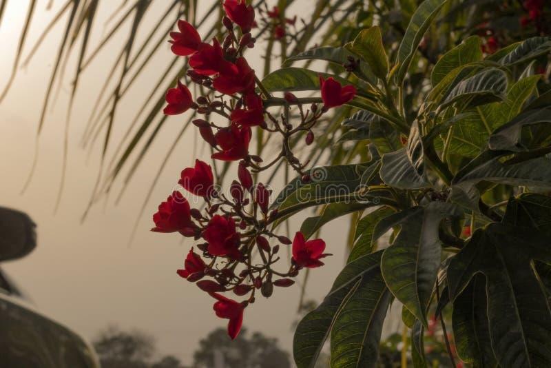 Vackra röda blommor i trädgården arkivbild