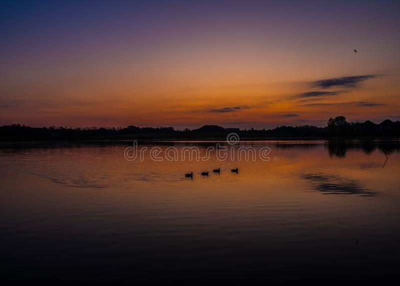 Vackra soluppgången med ankor vid Furzton Lake, Milton Keynes royaltyfri fotografi