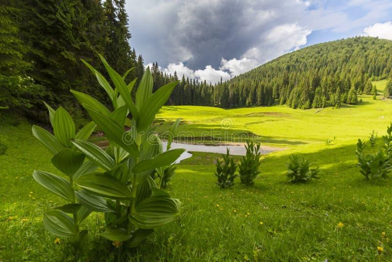 Vackra sommarlandskap i avlägsna landsbygdsområden i Europas berg, med stormmoln royaltyfria foton