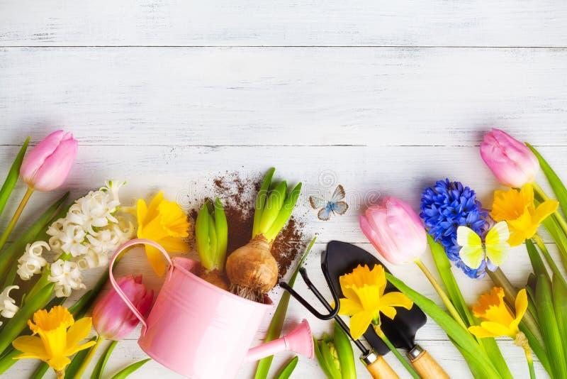 Vackra vårbakgrunder med trädgårdsverktyg, svening av färgade blommor och fjärilar Överkant fotografering för bildbyråer