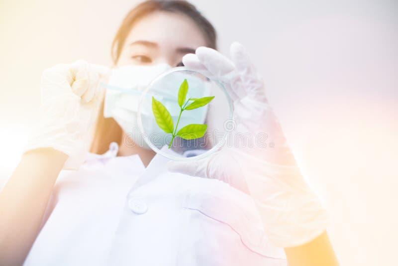 Vacuna verde del descubrimiento de la investigación de la medicina herbaria en el laboratorio de ciencia imagenes de archivo
