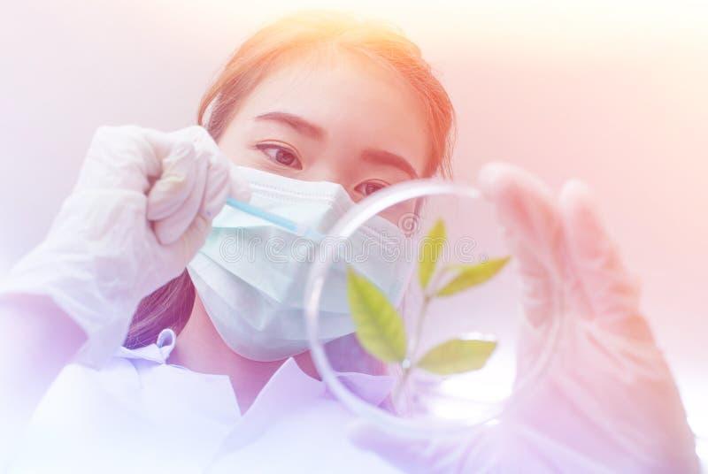 Vacuna verde del descubrimiento de la investigación de la medicina herbaria en el laboratorio de ciencia foto de archivo