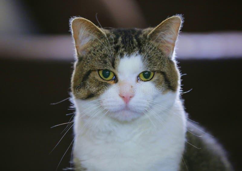 Vad önskar dessa kattögon att ska berätta dig? royaltyfri foto