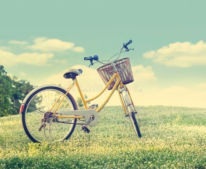 Vada in bicicletta sul giacimento e sull'erba di fiore bianco nel fondo della natura del sole, nel tono di colore dell'annata e d immagine stock libera da diritti