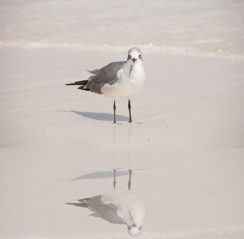 Vadande fågel royaltyfri bild
