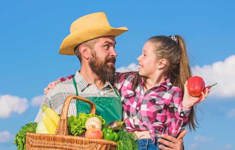 Vader en dochter de oogstgroenten van de greepmand Het tuinieren en het oogsten Het concept van het familielandbouwbedrijf Slecht stock afbeelding