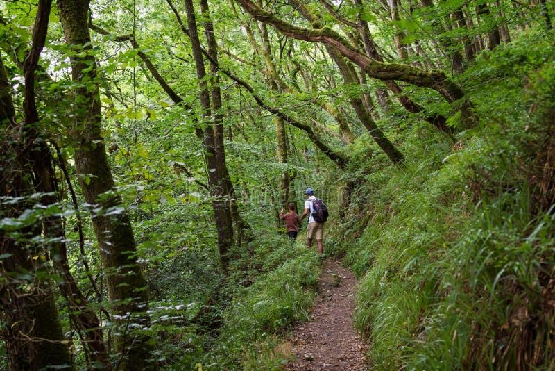 Vader en kind die een bosweg lopen stock afbeeldingen