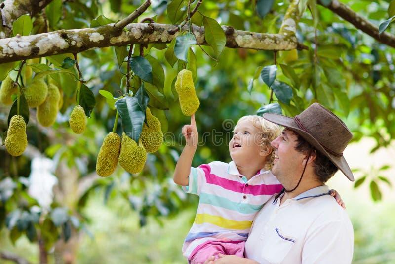 Vader en kind die jackfruit van boom plukken royalty-vrije stock foto