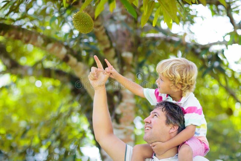 Vader en kind plukken durian van boom stock foto's