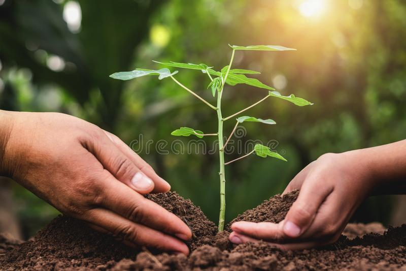 vader en kinderen die plantend jonge boom helpen royalty-vrije stock foto