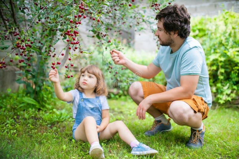 Vader en zijn aanbiddelijke kleine dochter die kers van kers-boom in de boomgaard eten royalty-vrije stock afbeeldingen