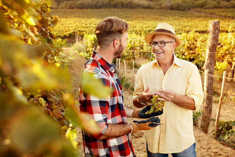 Vader en zoon in de traditie van de wijngaardfamilie royalty-vrije stock fotografie