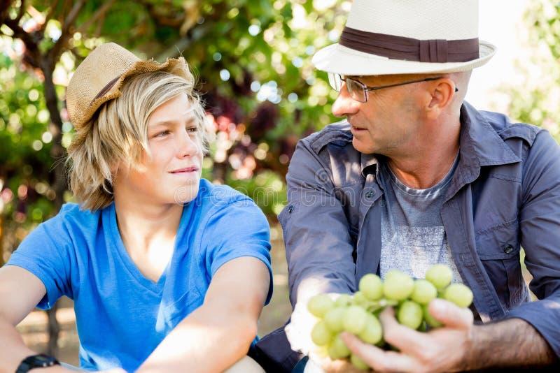 Vader en zoon in wijngaard stock afbeelding