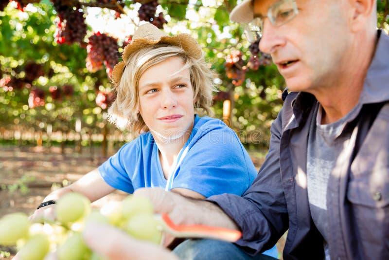 Vader en zoon in wijngaard stock fotografie