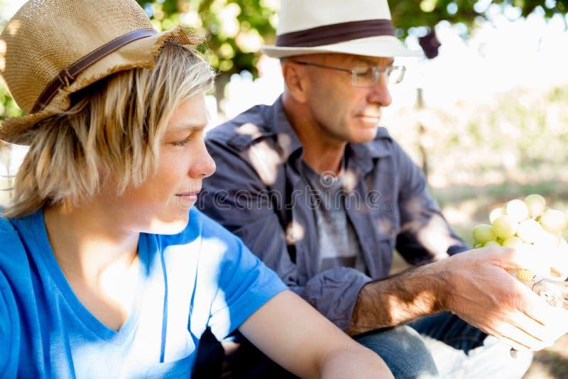 Vader en zoon in wijngaard stock foto