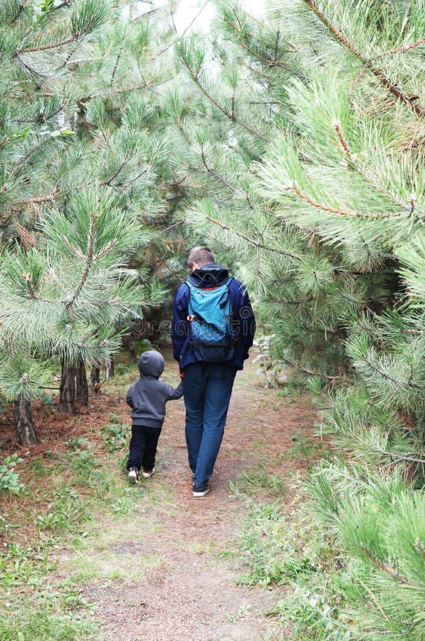 Vader en zoonsgang in het naaldbos onder de pijnbomen Het concept familiewaarden, stijging stock afbeeldingen