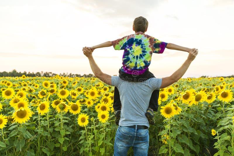 Vader met kind op een gebied van bloeiende zonnebloemen, vader` s dag stock foto