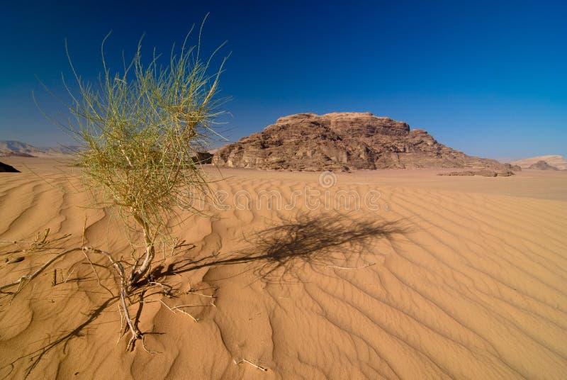 vadi рома пустыни стоковые изображения rf