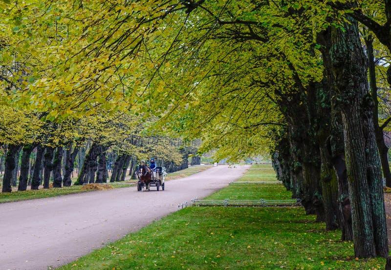 Vagão puxado por cavalos na estrada do outono imagens de stock