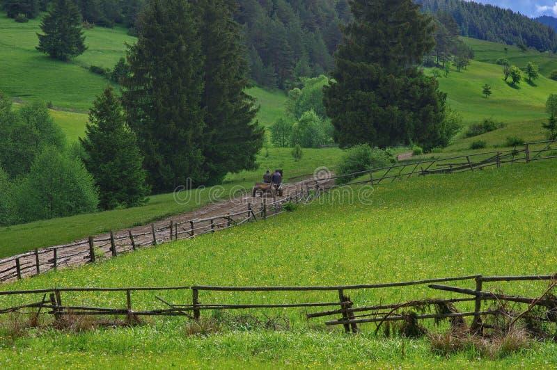Vagão puxado por cavalos na floresta fotografia de stock