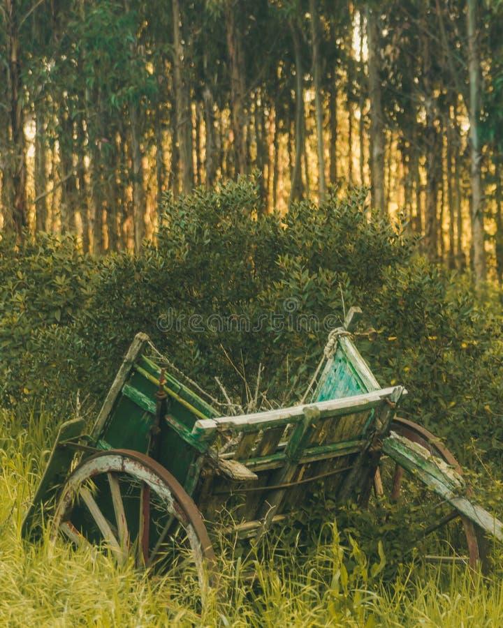 Vagão velho no meio das gramas no nascer do sol fotografia de stock