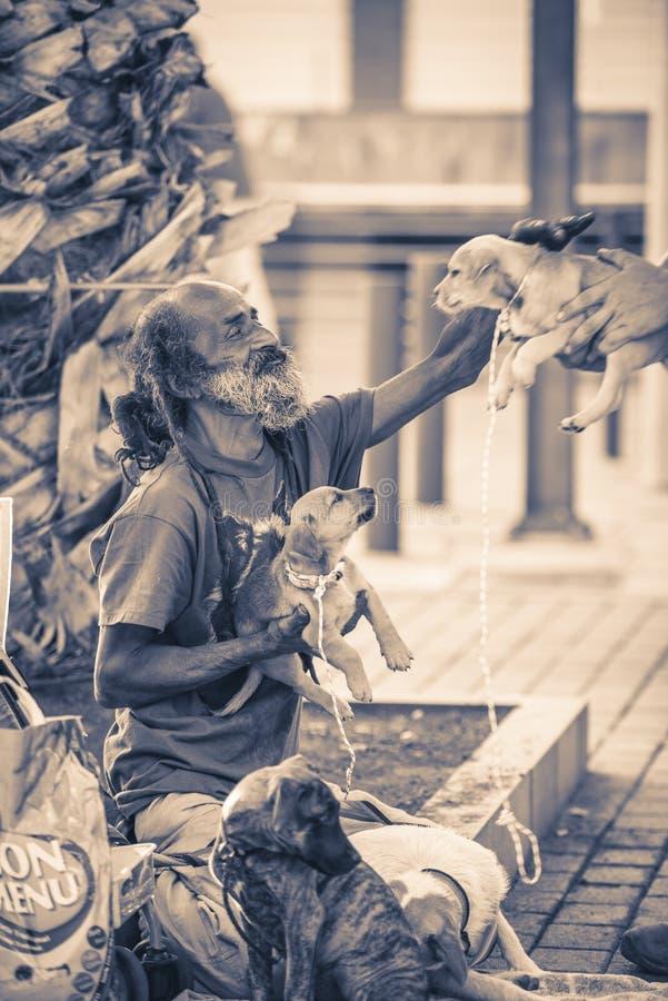 Vagabundo desabrigado que senta-se em uma rua com seus cães Calcula-se que há ao redor 40.000 os sem-abrigo na Espanha fotografia de stock