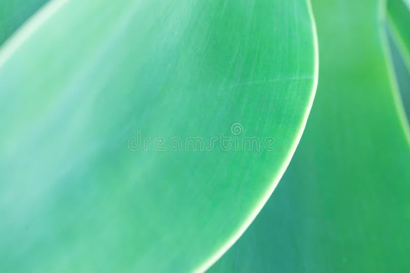 Vage Abstracte Botanische Aardachtergrond Elegant Groot Lichtgroen Palmblad Natuurlijke Zachte Groenkleur Achtergrond stock afbeeldingen