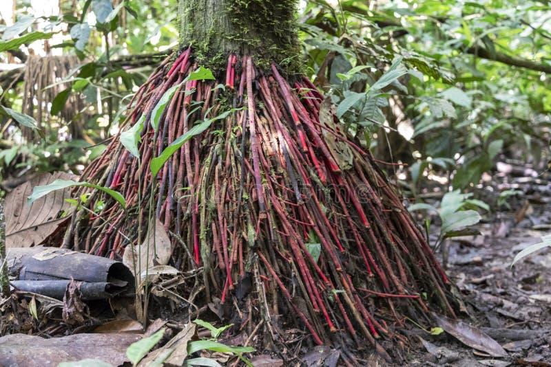 Vage achtergrond met wortels van regenwoud, het Stroomgebied van Amazonië in Zuid-Amerika royalty-vrije stock afbeelding