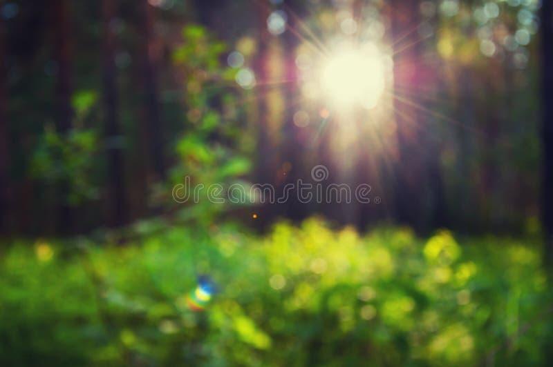 Vage bosachtergrond met groene door gras en zonnestralen royalty-vrije stock afbeeldingen