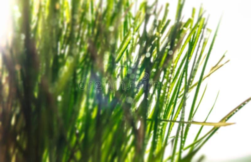 Download Vage grasachtergrond stock afbeelding. Afbeelding bestaande uit ochtend - 107705871