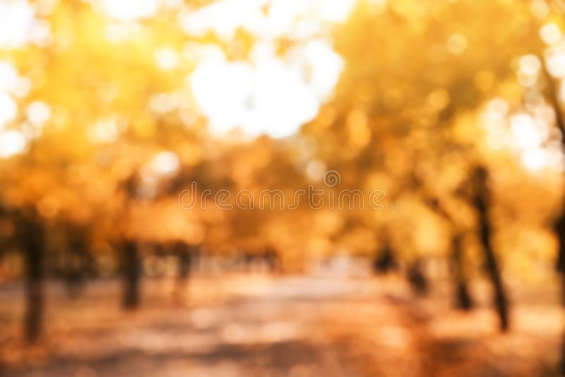 Vage mening van bomen met heldere bladeren in park stock afbeeldingen
