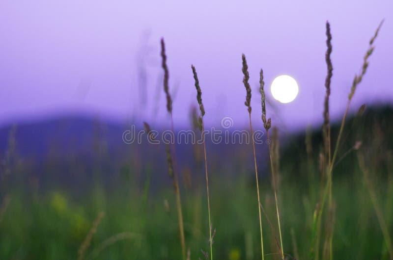 Vage volle maan die die over Altai-Bergen, Kazachstan toenemen, door lang groen gras op de zomernacht wordt gezien stock foto's