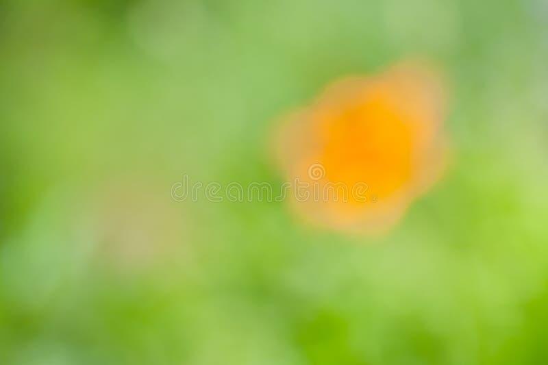 Vage zachte de zomer bloemenachtergrond met bokeheffect stock foto's
