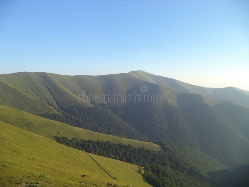 Vagel för Carpathian berg fotografering för bildbyråer