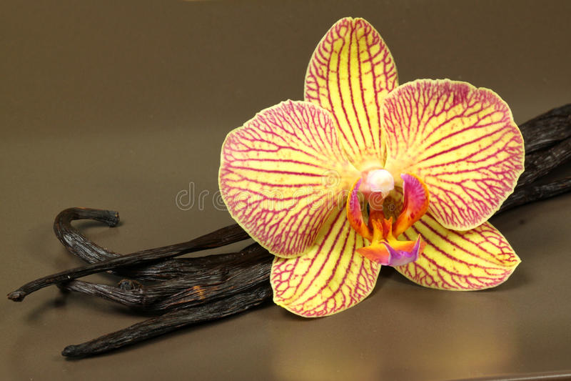 Vagens da baunilha e flor da orquídea fotos de stock royalty free