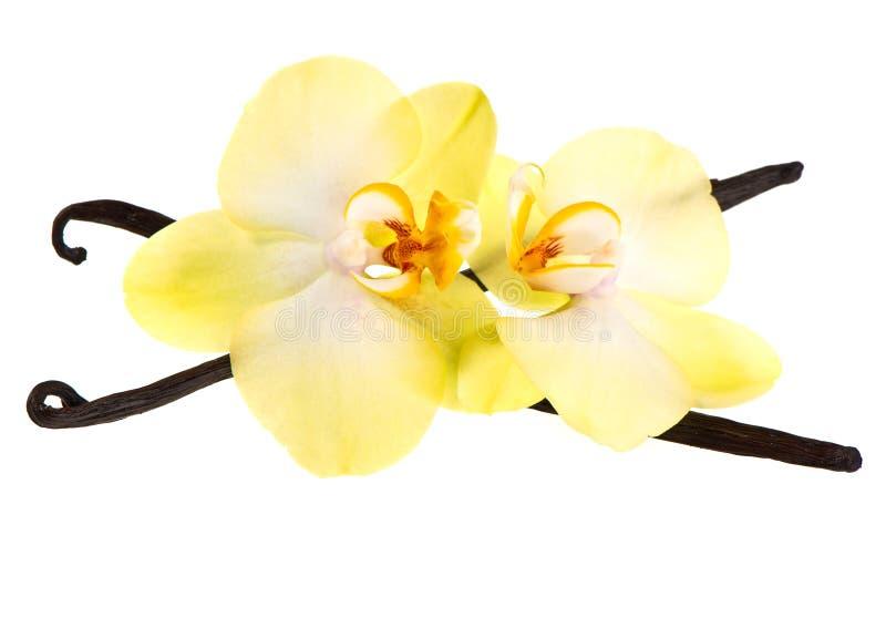 Vagens da baunilha e flor da orquídea fotos de stock