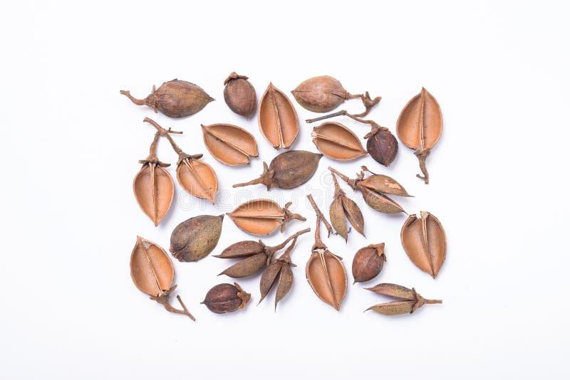 Vagens da semente da árvore arranjadas no teste padrão retangular imagens de stock