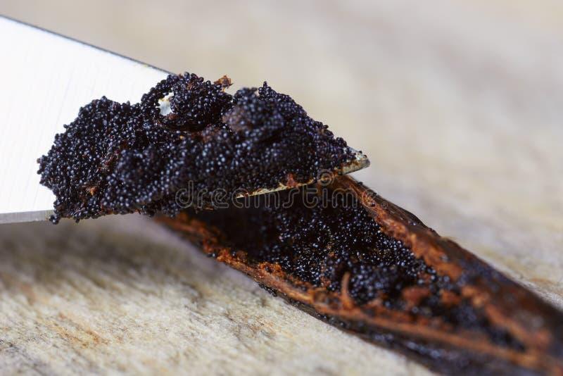Vagens da semente dos feijões de baunilha do corte da faca fotografia de stock royalty free