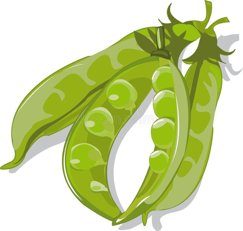 Vagens de ervilhas verdes ilustração do vetor