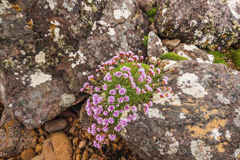 Vagga blommor som blommar i röd punktstrand royaltyfri fotografi