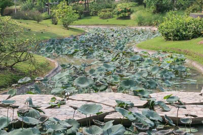 Vagga bron i härlig gräsplanträdgård arkivfoto