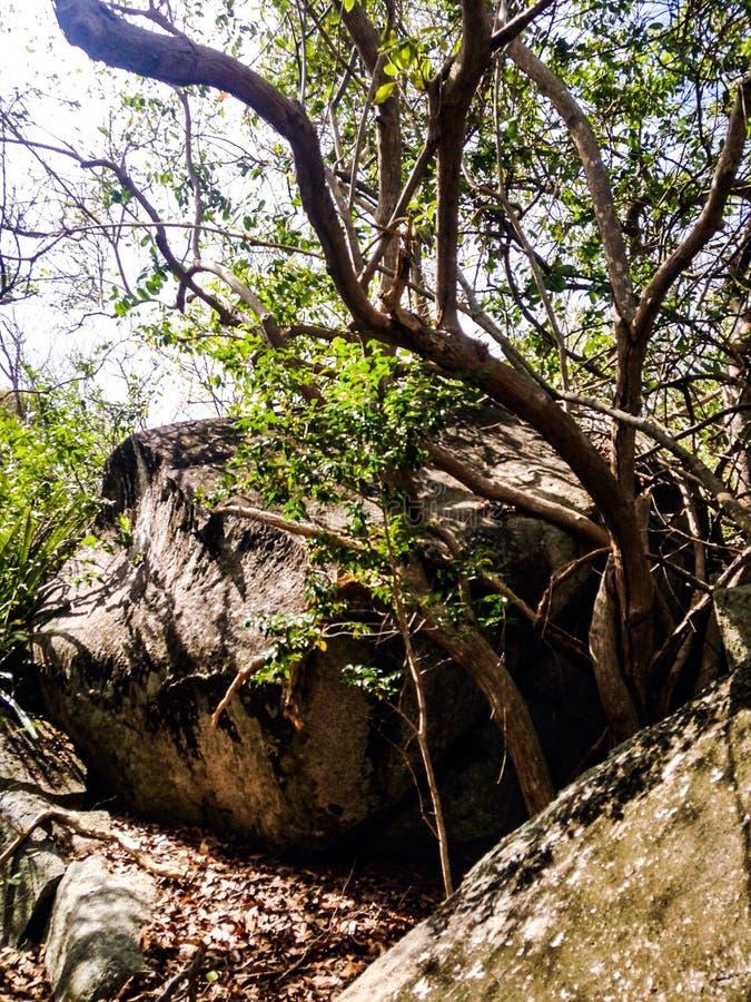 Vagga med ett träd arkivfoto