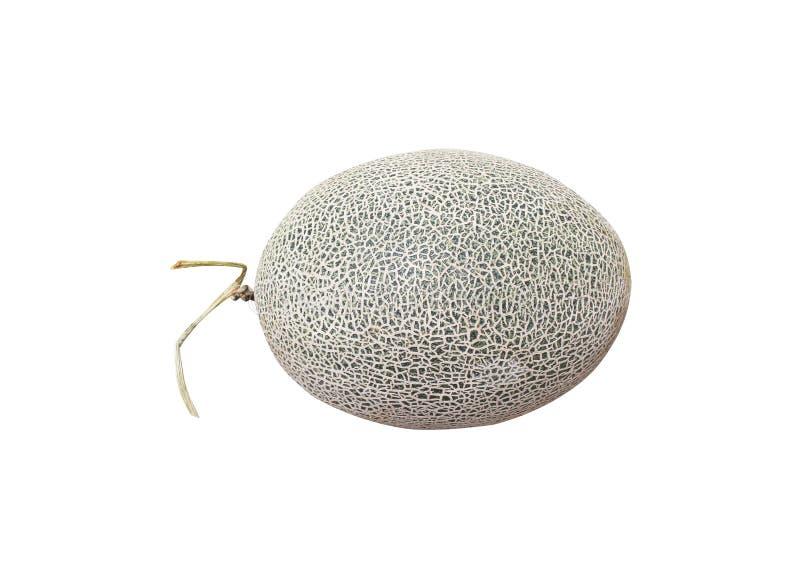 Vagga melon, eller cantaloupmelonmelon, den gröna melon förtjänar isolerat på vit bakgrund med urklippbanan royaltyfri bild