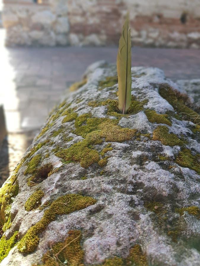 Vagga och göra grön naturen royaltyfria foton
