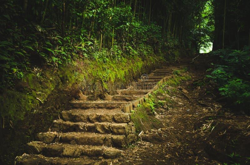 Vagga och gyttjatrappa som går till ljuset i en skog nära Honolulu, USA royaltyfria bilder
